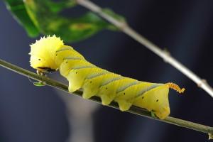 caterpillar-1727976_1280-2